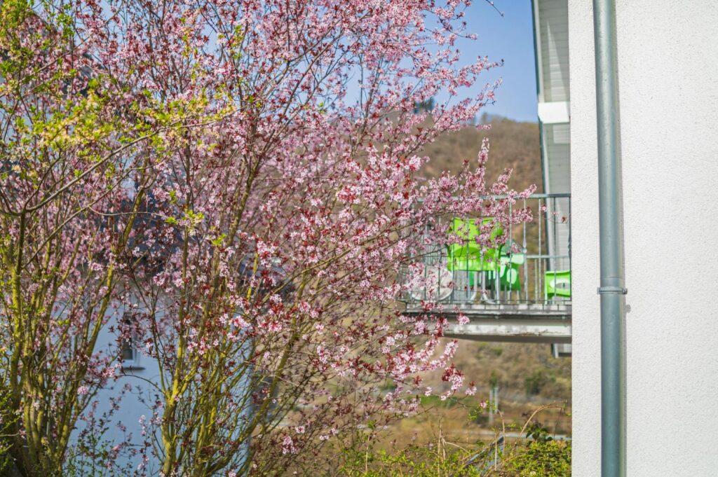 WEB-_0047_Außen Frühling