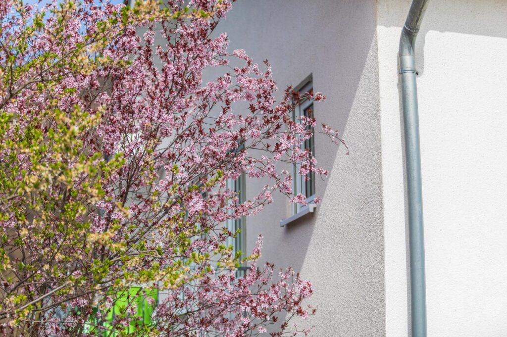 WEB-_0048_Außen Frühling 2